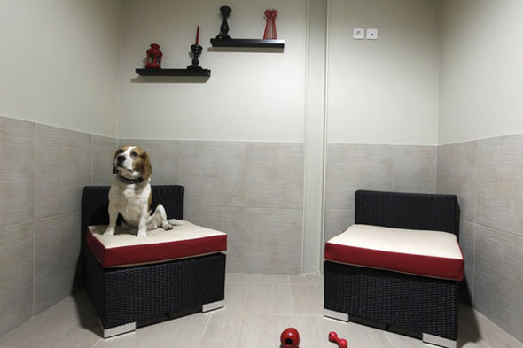 Actuel Dogs Hotel - LuxeTentations.fr